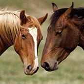 5 dicas essenciais para você cuidar dos seus cavalos